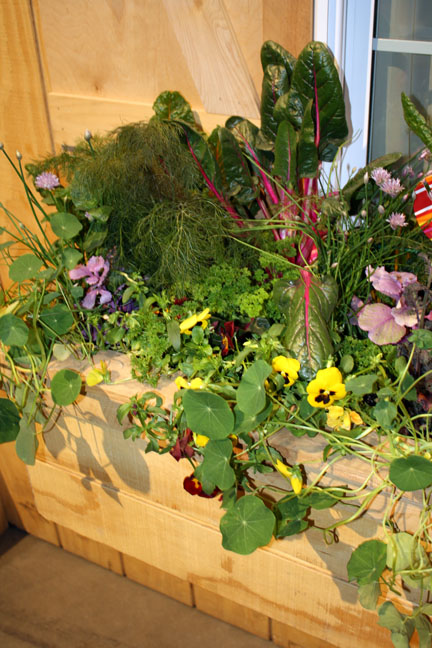 edible box with chard, pansy, nasturtium