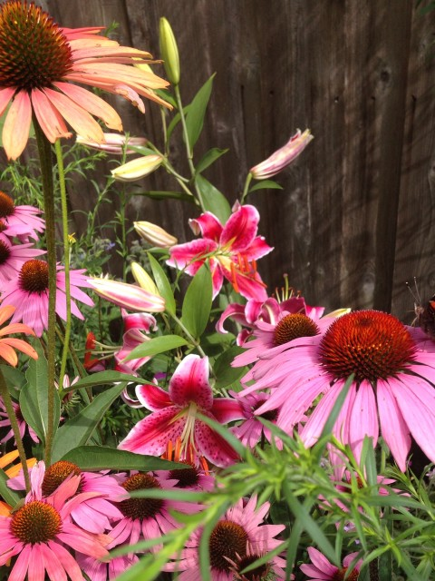 Currently the garden is exploding with flowers!